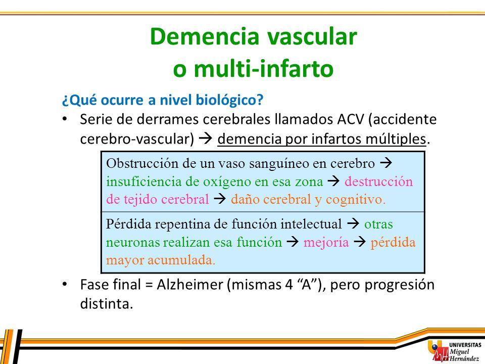 Demencia vascular o multi-infarto ¿Qué ocurre a nivel biológico? Serie de derrames cerebrales llamados ACV (accidente cerebro-vascular) demencia por i
