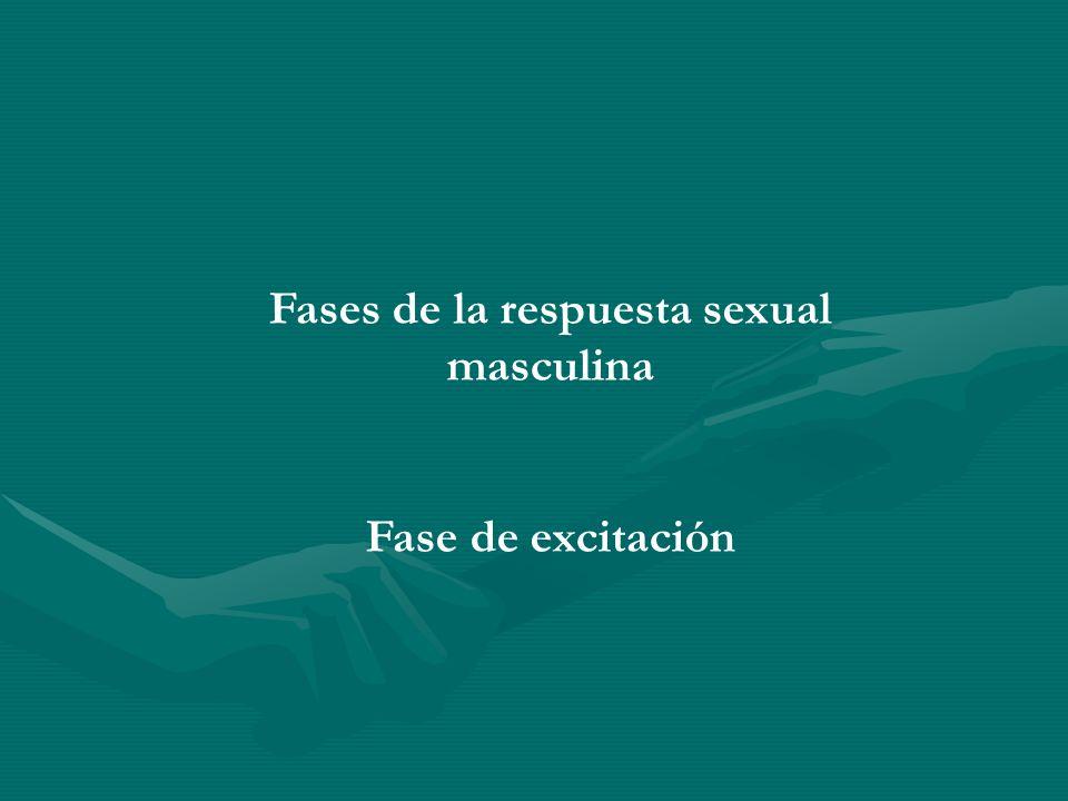 Fases de la respuesta sexual masculina Fase de excitación