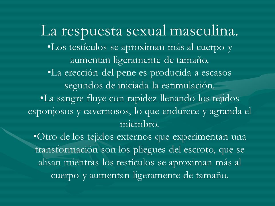 La respuesta sexual masculina. Los testículos se aproximan más al cuerpo y aumentan ligeramente de tamaño. La erección del pene es producida a escasos