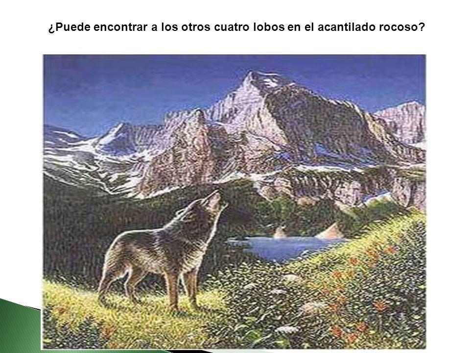 Lic. Edgar Celestino Bazan - I.E. Ventura Ccalamaqui - Barranca ¿Puede encontrar a los otros cuatro lobos en el acantilado rocoso?