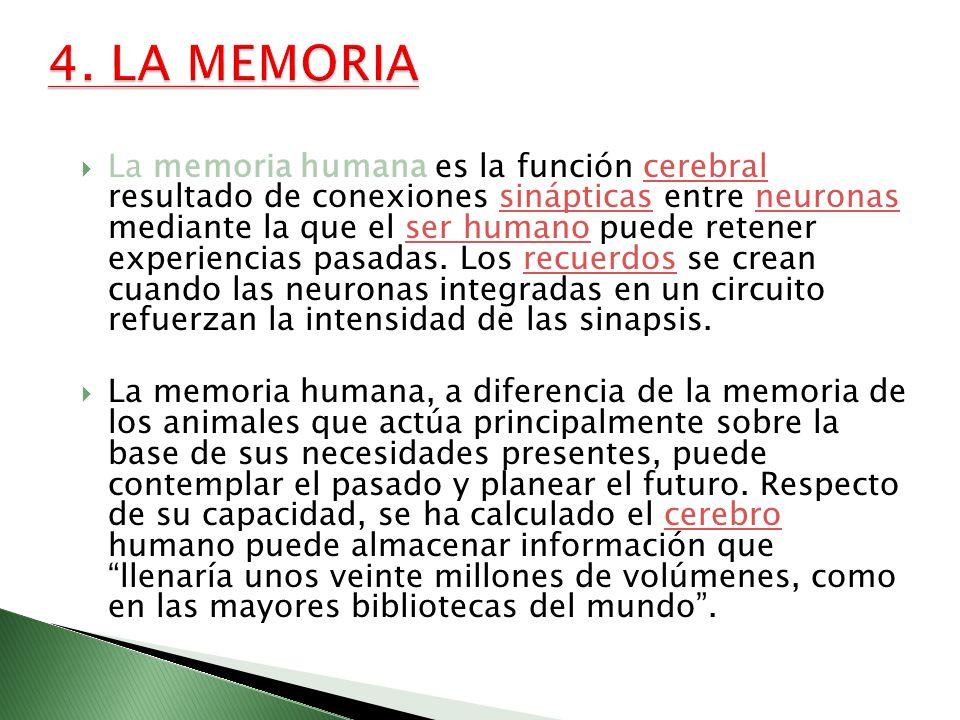 La memoria humana es la función cerebral resultado de conexiones sinápticas entre neuronas mediante la que el ser humano puede retener experiencias pa