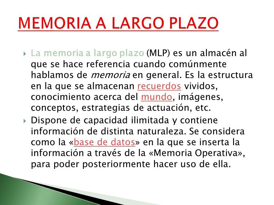 La memoria a largo plazo (MLP) es un almacén al que se hace referencia cuando comúnmente hablamos de memoria en general. Es la estructura en la que se