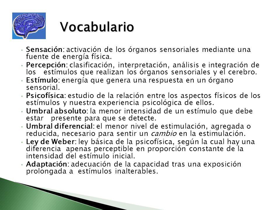 Vocabulario Sensación: activación de los órganos sensoriales mediante una fuente de energía física. Percepción: clasificación, interpretación, análisi