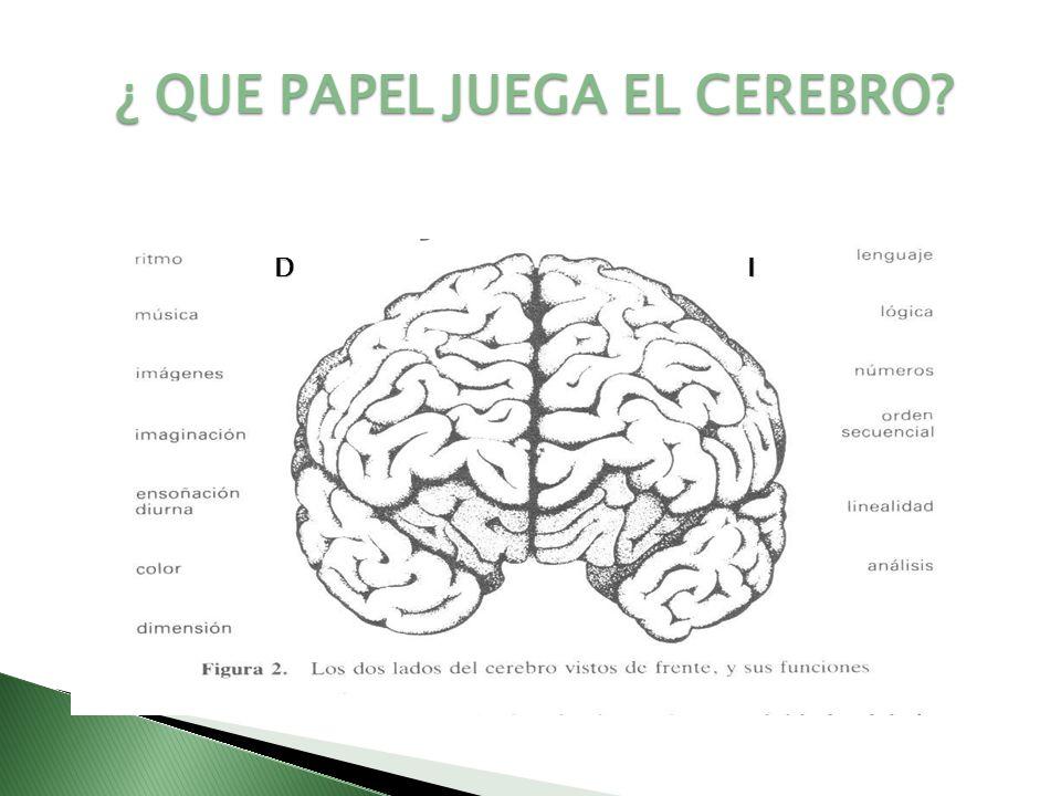 La memoria humana es la función cerebral resultado de conexiones sinápticas entre neuronas mediante la que el ser humano puede retener experiencias pasadas.