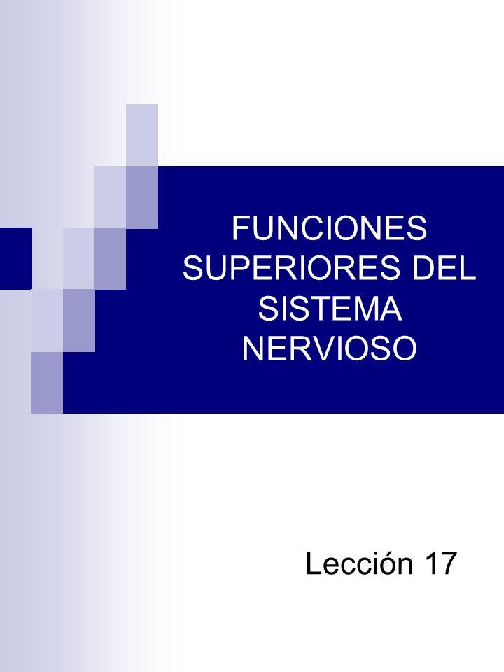 FUNCIONES SUPERIORES DEL SISTEMA NERVIOSO Lección 17