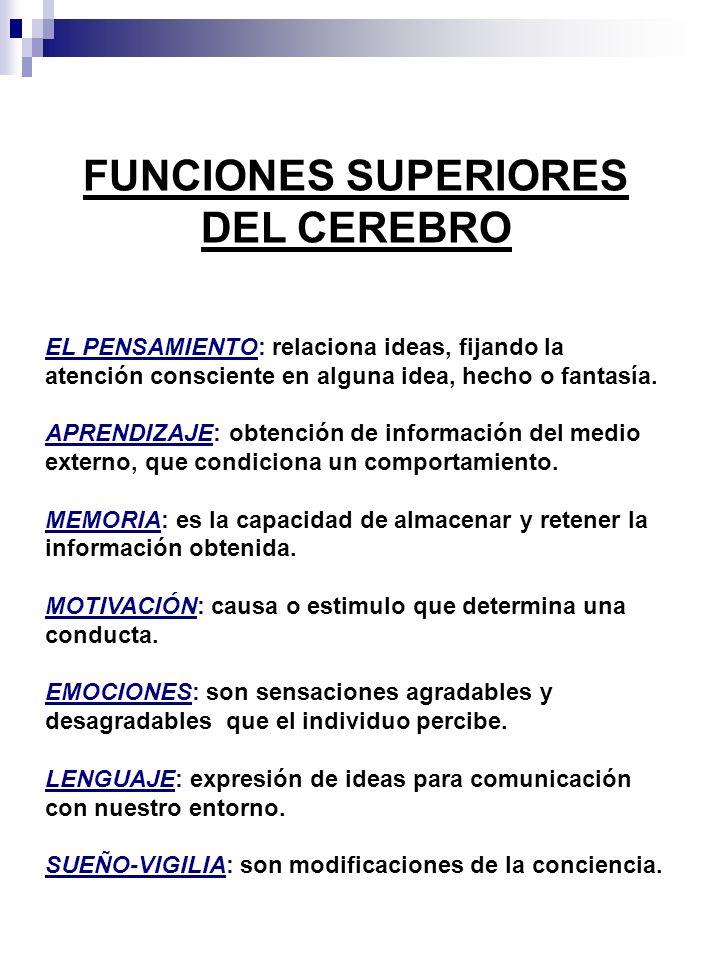 FUNCIONES SUPERIORES DEL CEREBRO EL PENSAMIENTO: relaciona ideas, fijando la atención consciente en alguna idea, hecho o fantasía. APRENDIZAJE: obtenc