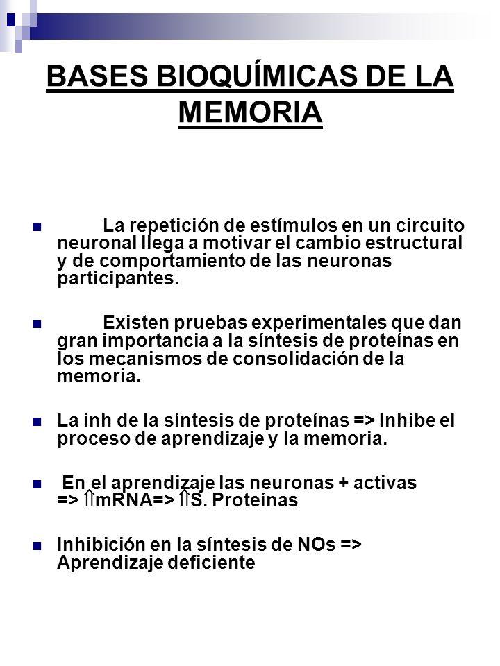 BASES BIOQUÍMICAS DE LA MEMORIA La repetición de estímulos en un circuito neuronal llega a motivar el cambio estructural y de comportamiento de las neuronas participantes.
