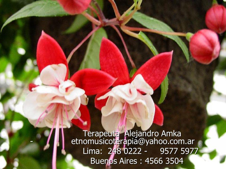 Terapeuta Alejandro Amka - etnomusicoterapia@yahoo.com.ar Terapeuta Alejandro Amka - etnomusicoterapia@yahoo.com.ar Lima: 248 0222 - 9577 5977 Lima: 2