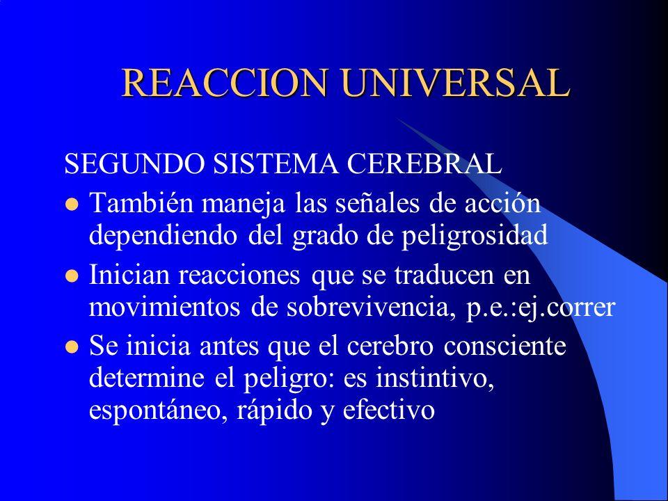 REACCION UNIVERSAL SEGUNDO SISTEMA CEREBRAL También maneja las señales de acción dependiendo del grado de peligrosidad Inician reacciones que se tradu