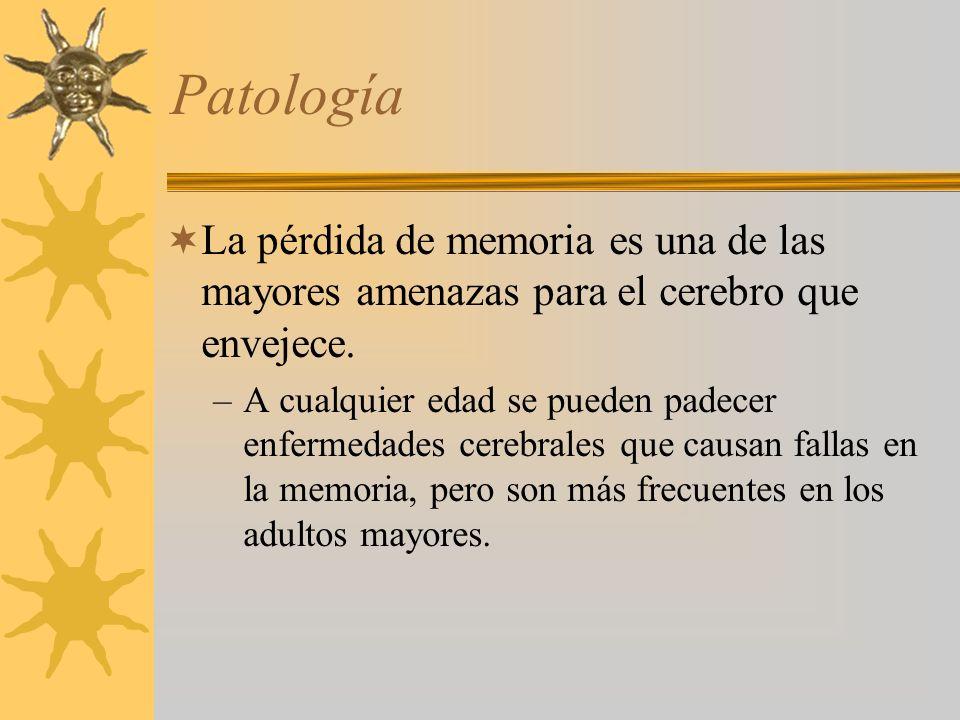 Patología La pérdida de memoria es una de las mayores amenazas para el cerebro que envejece. –A cualquier edad se pueden padecer enfermedades cerebral