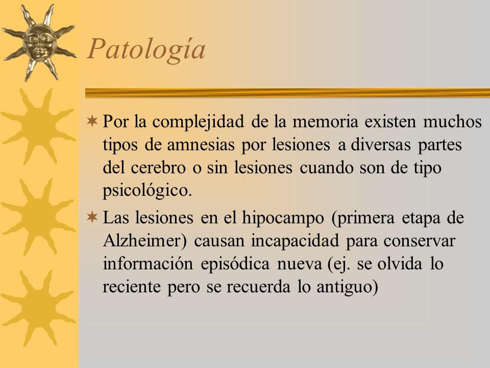 Patología Por la complejidad de la memoria existen muchos tipos de amnesias por lesiones a diversas partes del cerebro o sin lesiones cuando son de tipo psicológico.