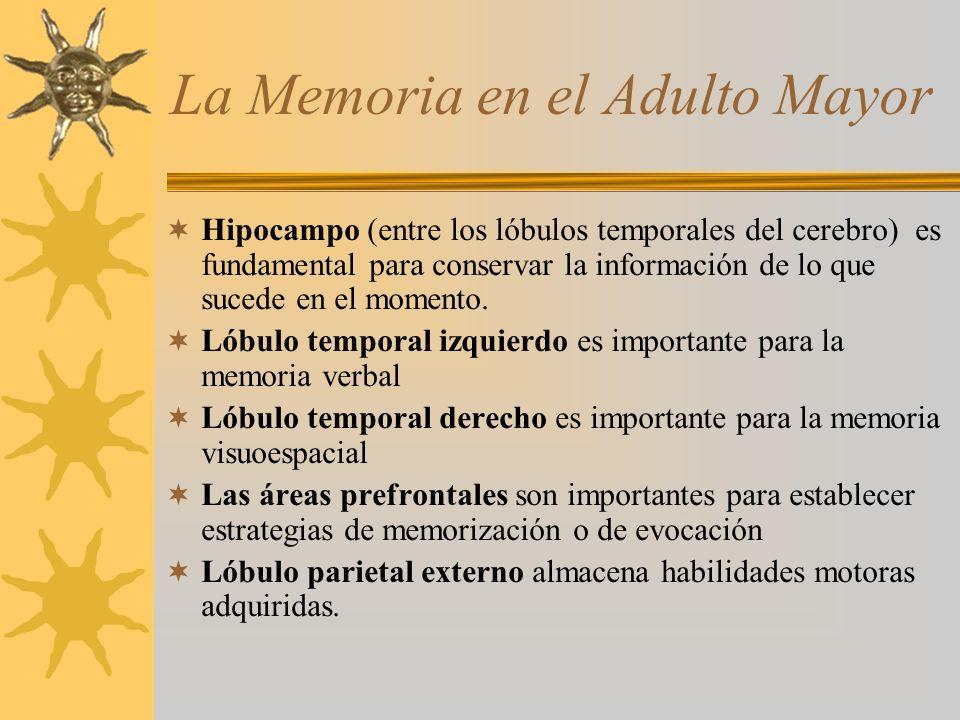 La Memoria en el Adulto Mayor Hipocampo (entre los lóbulos temporales del cerebro) es fundamental para conservar la información de lo que sucede en el
