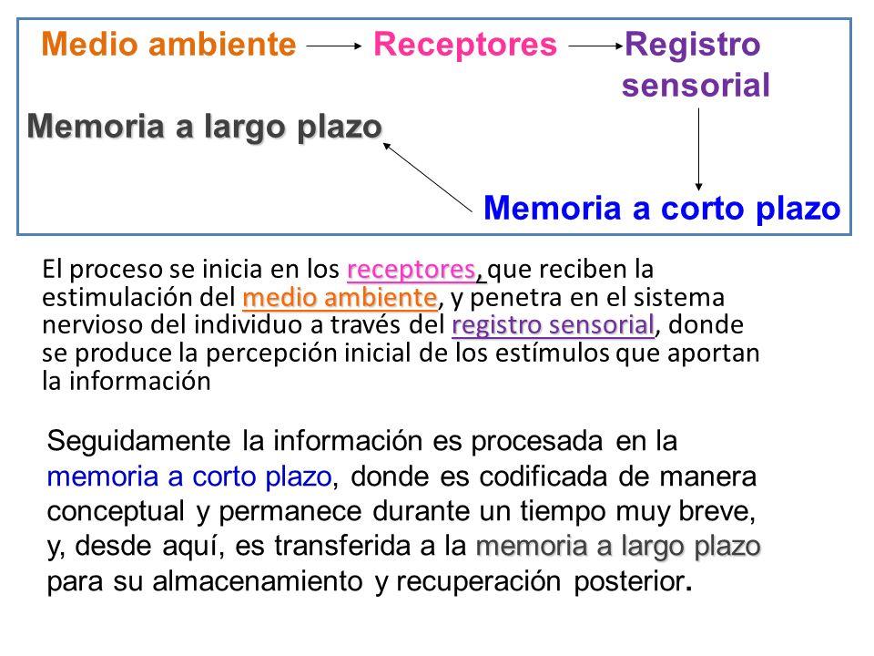 receptores, medio ambiente registro sensorial El proceso se inicia en los receptores, que reciben la estimulación del medio ambiente, y penetra en el