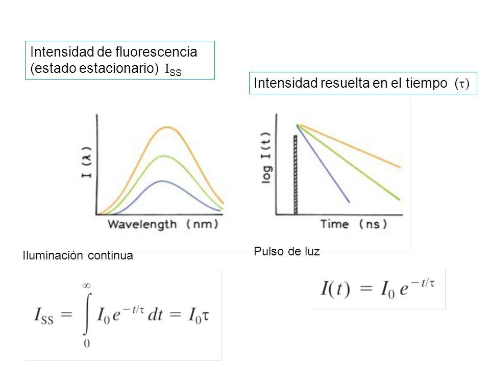 Intensidad de fluorescencia (estado estacionario) I SS Intensidad resuelta en el tiempo ( ) Pulso de luz Iluminación continua
