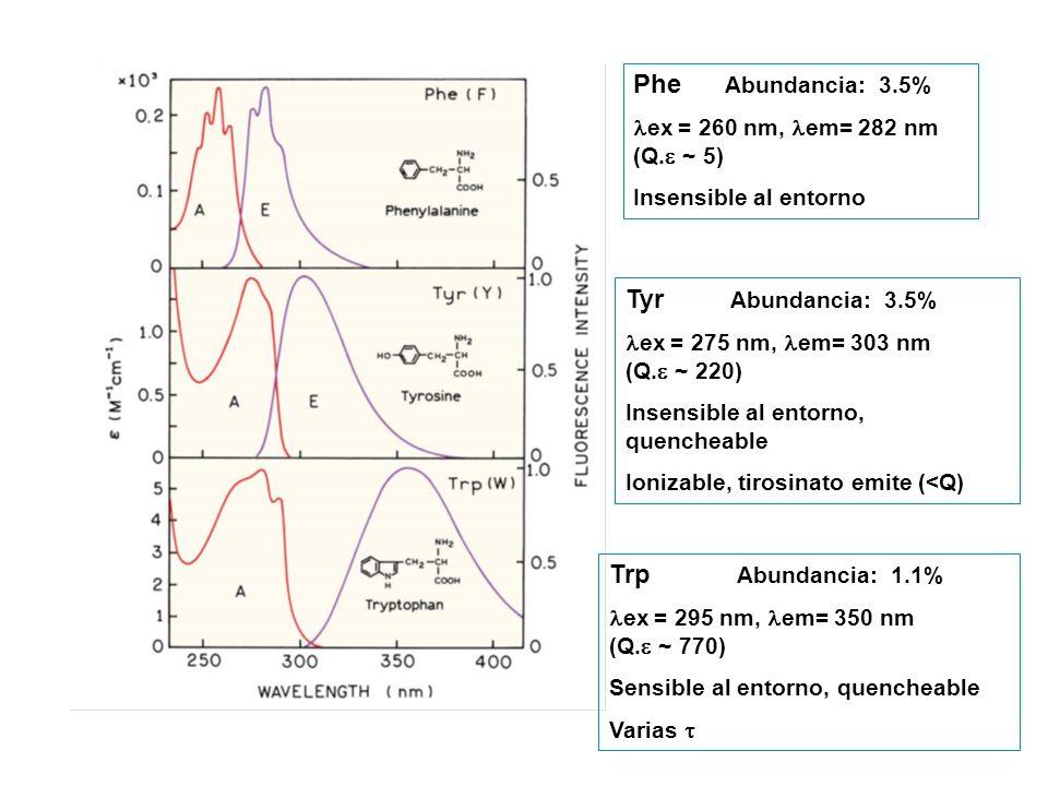 Phe Abundancia: 3.5% ex = 260 nm, em= 282 nm (Q. ~ 5) Insensible al entorno Tyr Abundancia: 3.5% ex = 275 nm, em= 303 nm (Q. ~ 220) Insensible al ento