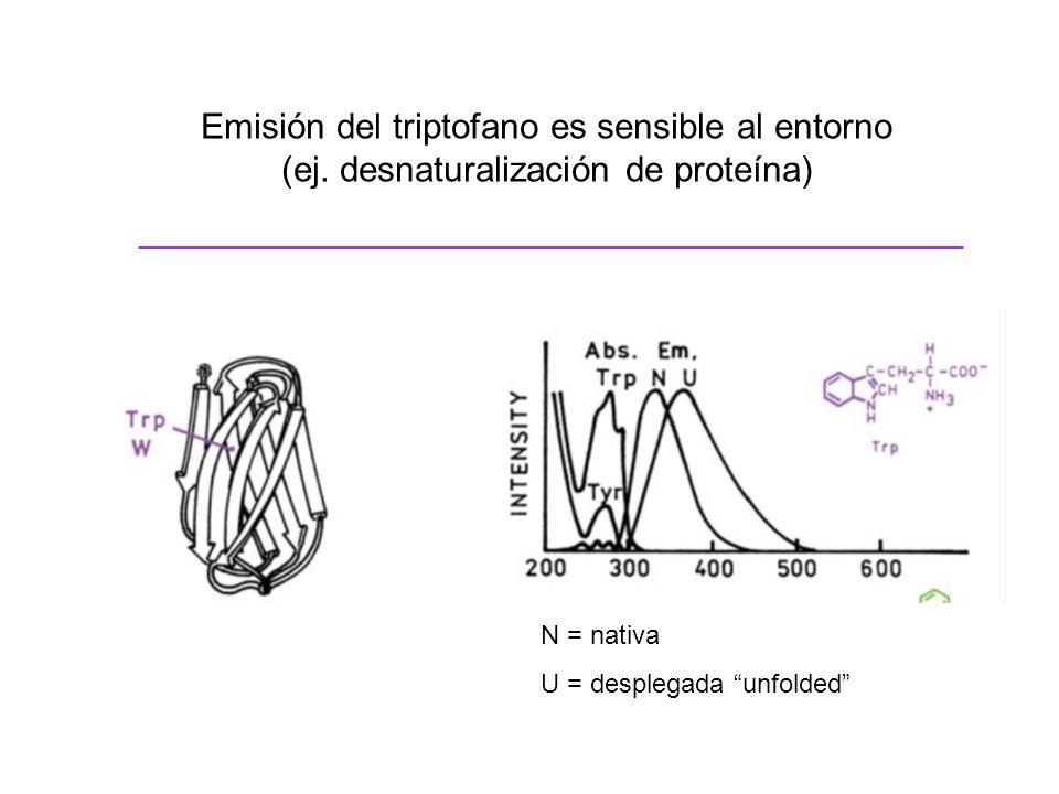 Emisión del triptofano es sensible al entorno (ej. desnaturalización de proteína) N = nativa U = desplegada unfolded