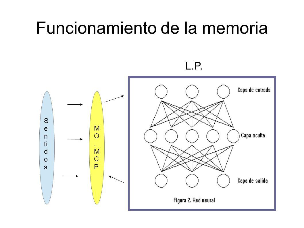 Factores protectores de la memoria Intelectualmente activo. Ejercicio Dieta Dormir Optimismo