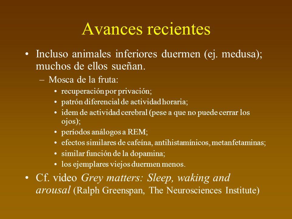 Avances recientes Incluso animales inferiores duermen (ej.