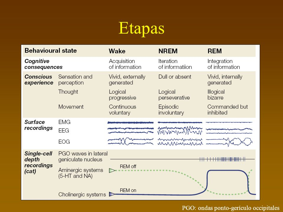 Hobson & McCarley Las neuronas del pons usan la acetilcolina (un neurotransmisor químico) para enviar impulsos a diversas regiones.