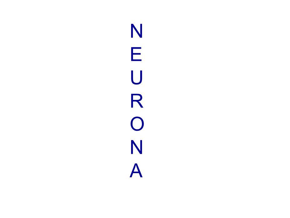 NEURONANEURONA