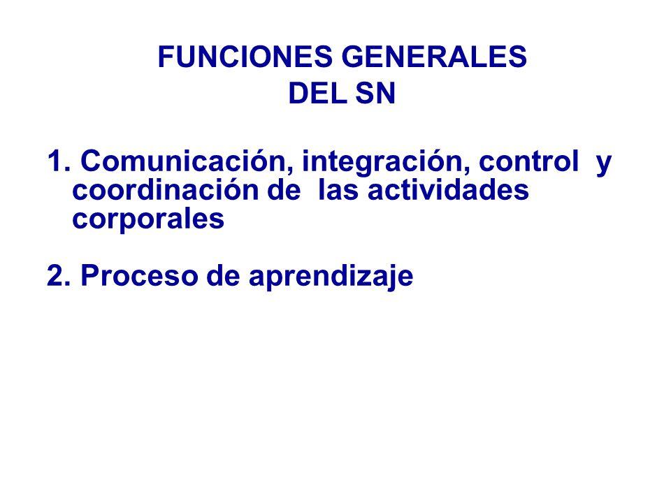 Comunicación, integración, control y coordinación de las actividades corporales Proceso de aprendizaje FUNCIONES GENERALES DEL SN