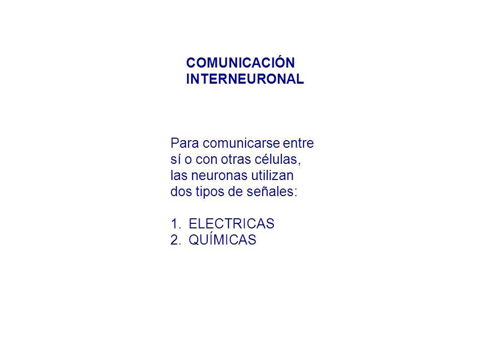 Para comunicarse entre sí o con otras células, las neuronas utilizan dos tipos de señales: 1.ELECTRICAS 2.QUÍMICAS COMUNICACIÓN INTERNEURONAL
