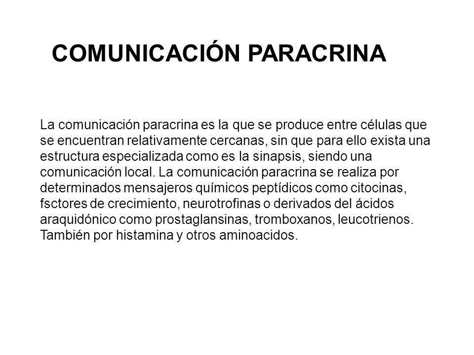La comunicación paracrina es la que se produce entre células que se encuentran relativamente cercanas, sin que para ello exista una estructura especializada como es la sinapsis, siendo una comunicación local.