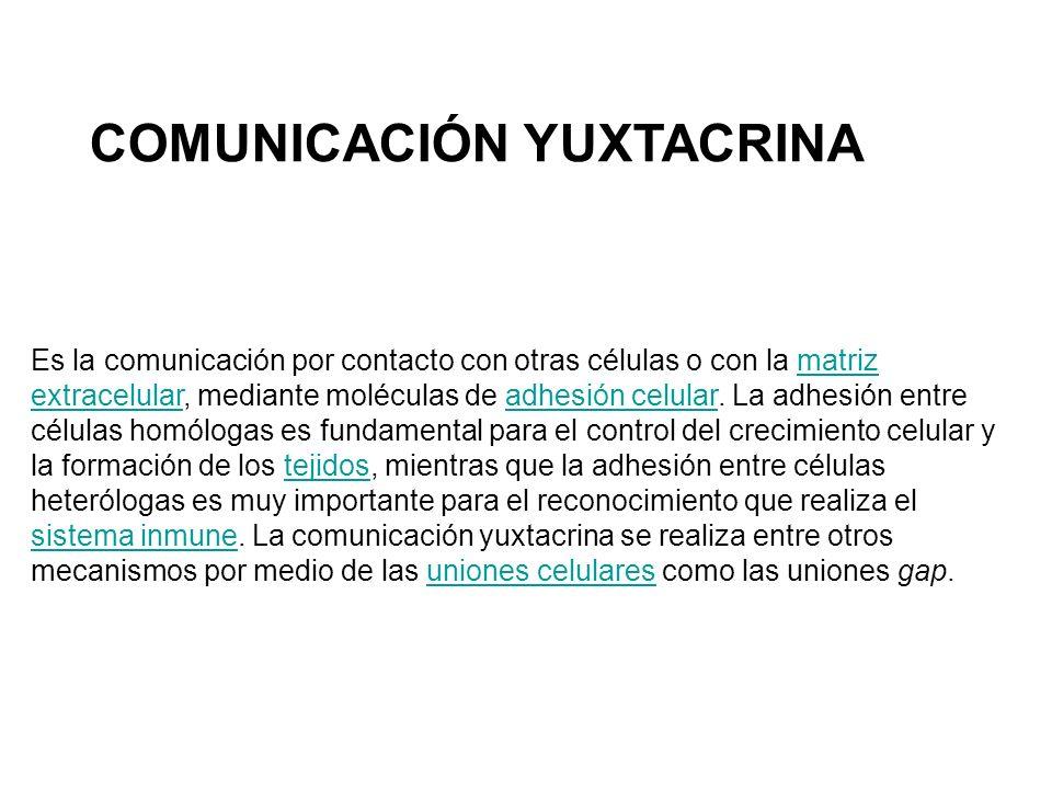Es la comunicación por contacto con otras células o con la matriz extracelular, mediante moléculas de adhesión celular.