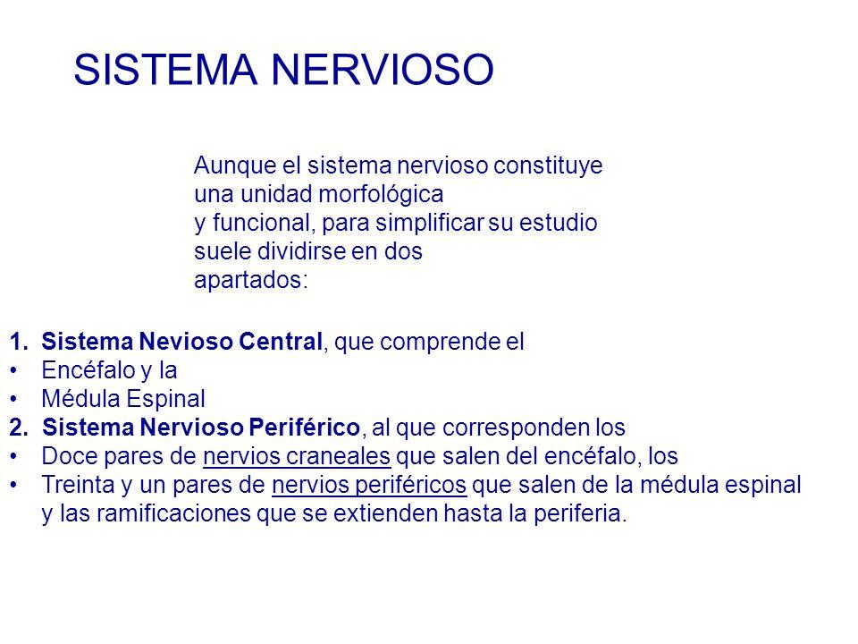 1.Sistema Nevioso Central, que comprende el Encéfalo y la Médula Espinal 2.