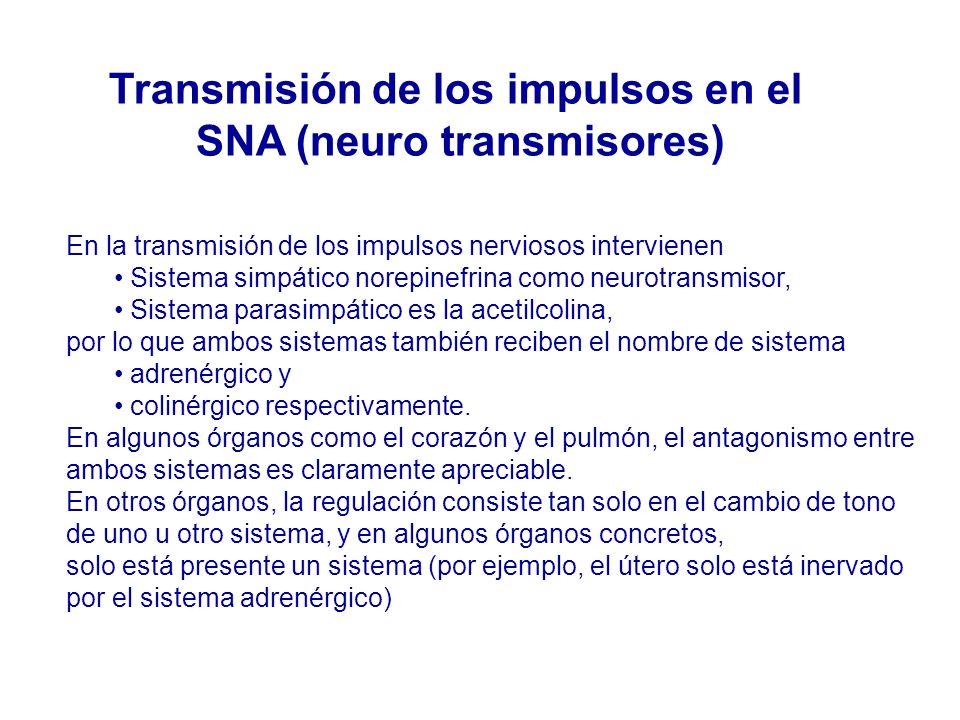 En la transmisión de los impulsos nerviosos intervienen Sistema simpático norepinefrina como neurotransmisor, Sistema parasimpático es la acetilcolina, por lo que ambos sistemas también reciben el nombre de sistema adrenérgico y colinérgico respectivamente.
