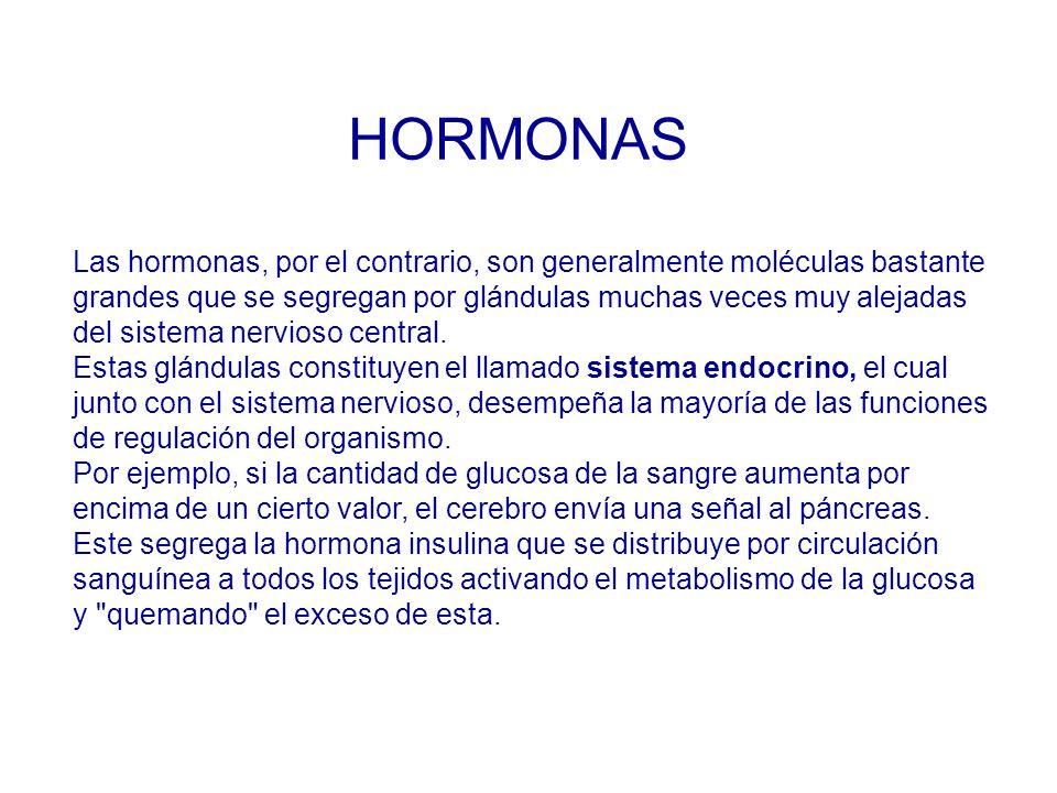 Las hormonas, por el contrario, son generalmente moléculas bastante grandes que se segregan por glándulas muchas veces muy alejadas del sistema nervioso central.