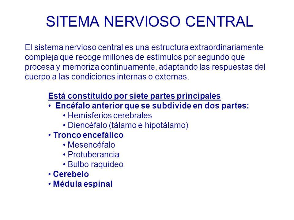 Está constituído por siete partes principales Encéfalo anterior que se subdivide en dos partes: Hemisferios cerebrales Diencéfalo (tálamo e hipotálamo) Tronco encefálico Mesencéfalo Protuberancia Bulbo raquídeo Cerebelo Médula espinal El sistema nervioso central es una estructura extraordinariamente compleja que recoge millones de estímulos por segundo que procesa y memoriza continuamente, adaptando las respuestas del cuerpo a las condiciones internas o externas.