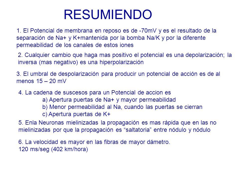 RESUMIENDO 1.