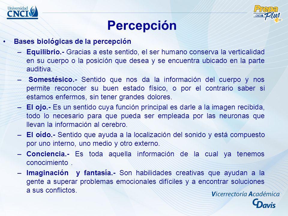 Bases biológicas de la percepción –Equilibrio.- Gracias a este sentido, el ser humano conserva la verticalidad en su cuerpo o la posición que desea y se encuentra ubicado en la parte auditiva.
