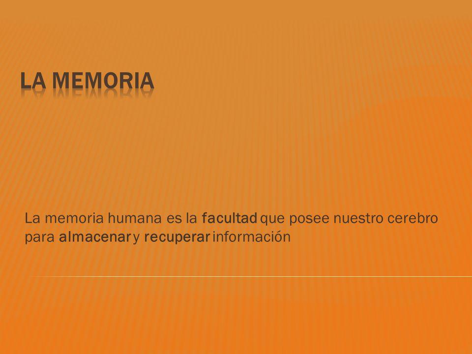 La memoria humana es la facultad que posee nuestro cerebro para almacenar y recuperar información