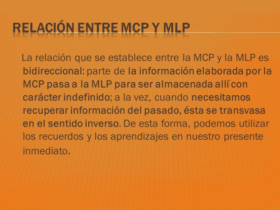 La relación que se establece entre la MCP y la MLP es bidireccional: parte de la información elaborada por la MCP pasa a la MLP para ser almacenada al