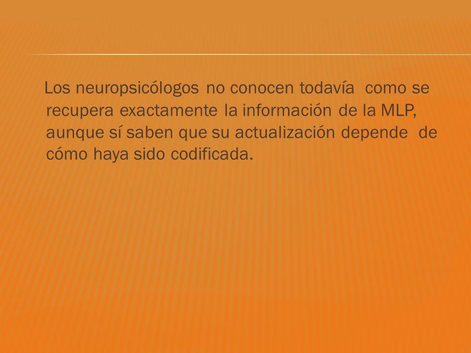 Los neuropsicólogos no conocen todavía como se recupera exactamente la información de la MLP, aunque sí saben que su actualización depende de cómo hay