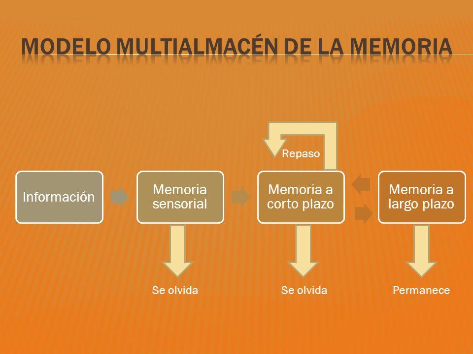 Información Memoria sensorial Memoria a corto plazo Memoria a largo plazo Repaso Se olvida Permanece