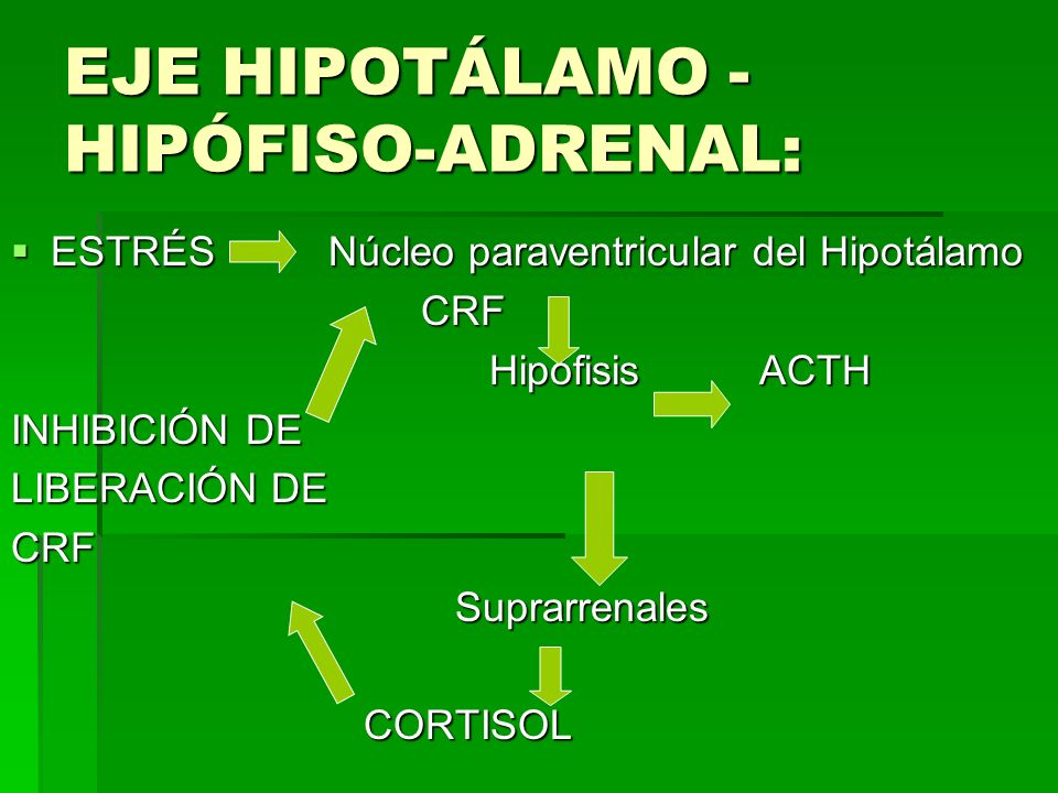 EJE HIPOTÁLAMO - HIPÓFISO-ADRENAL: ESTRÉS Núcleo paraventricular del Hipotálamo ESTRÉS Núcleo paraventricular del Hipotálamo CRF CRF Hipófisis ACTH Hi