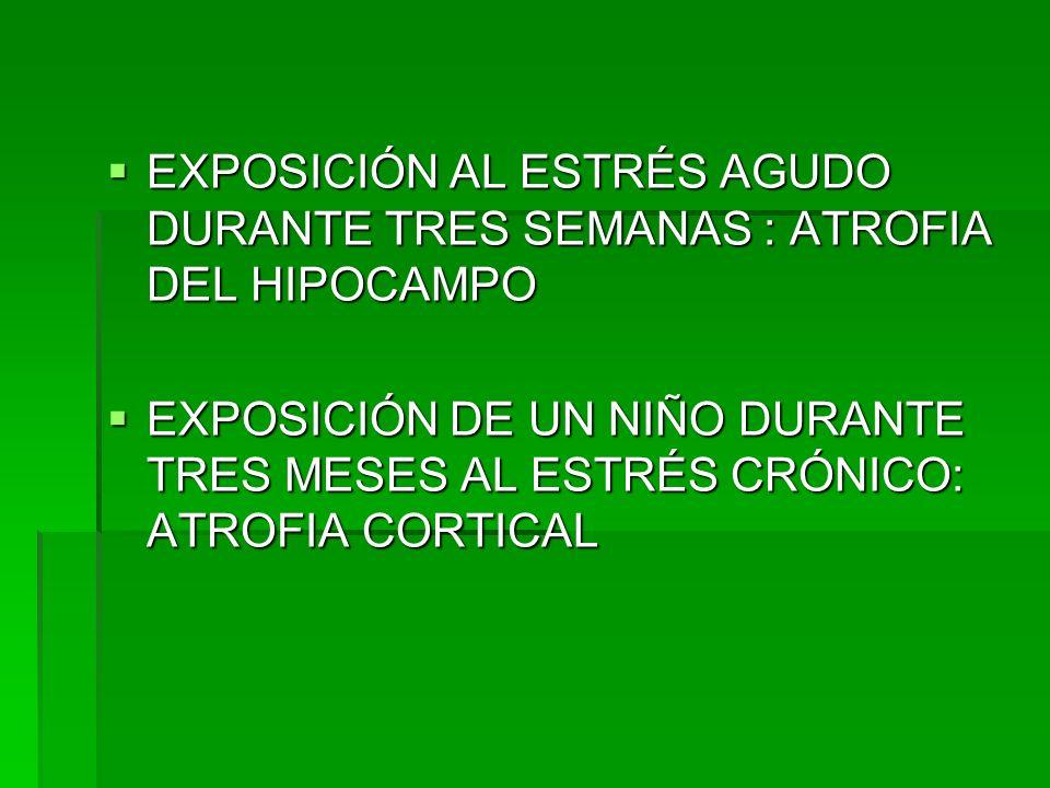 EXPOSICIÓN AL ESTRÉS AGUDO DURANTE TRES SEMANAS : ATROFIA DEL HIPOCAMPO EXPOSICIÓN AL ESTRÉS AGUDO DURANTE TRES SEMANAS : ATROFIA DEL HIPOCAMPO EXPOSI