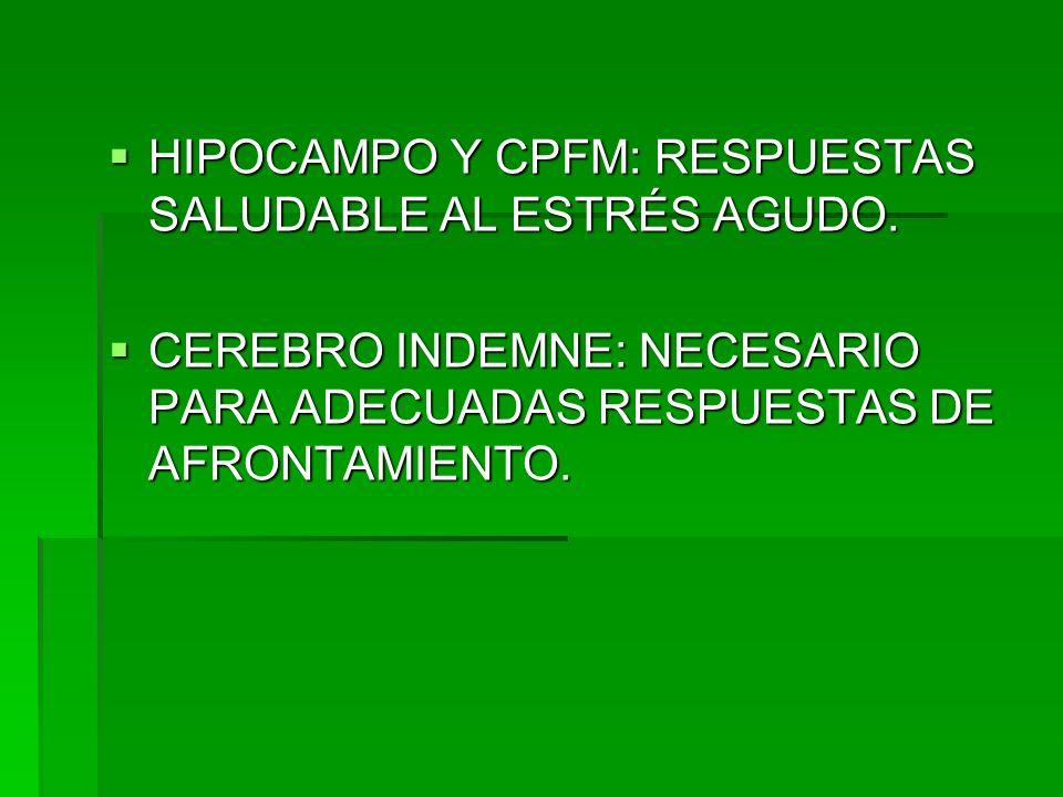 HIPOCAMPO Y CPFM: RESPUESTAS SALUDABLE AL ESTRÉS AGUDO. HIPOCAMPO Y CPFM: RESPUESTAS SALUDABLE AL ESTRÉS AGUDO. CEREBRO INDEMNE: NECESARIO PARA ADECUA