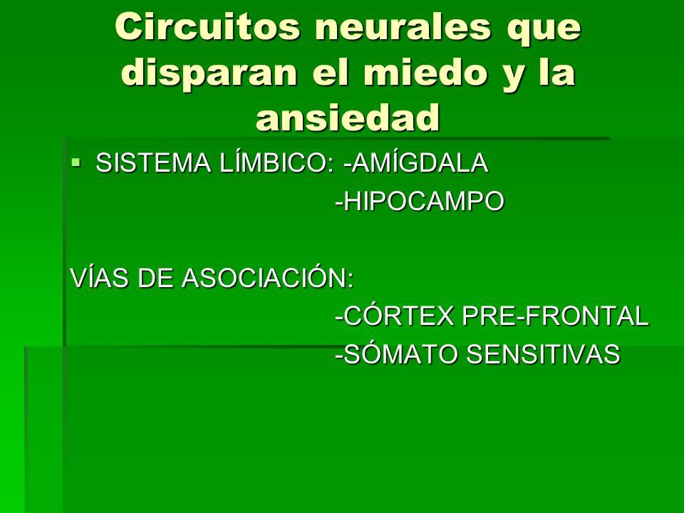 Circuitos neurales que disparan el miedo y la ansiedad SISTEMA LÍMBICO: -AMÍGDALA SISTEMA LÍMBICO: -AMÍGDALA -HIPOCAMPO -HIPOCAMPO VÍAS DE ASOCIACIÓN: