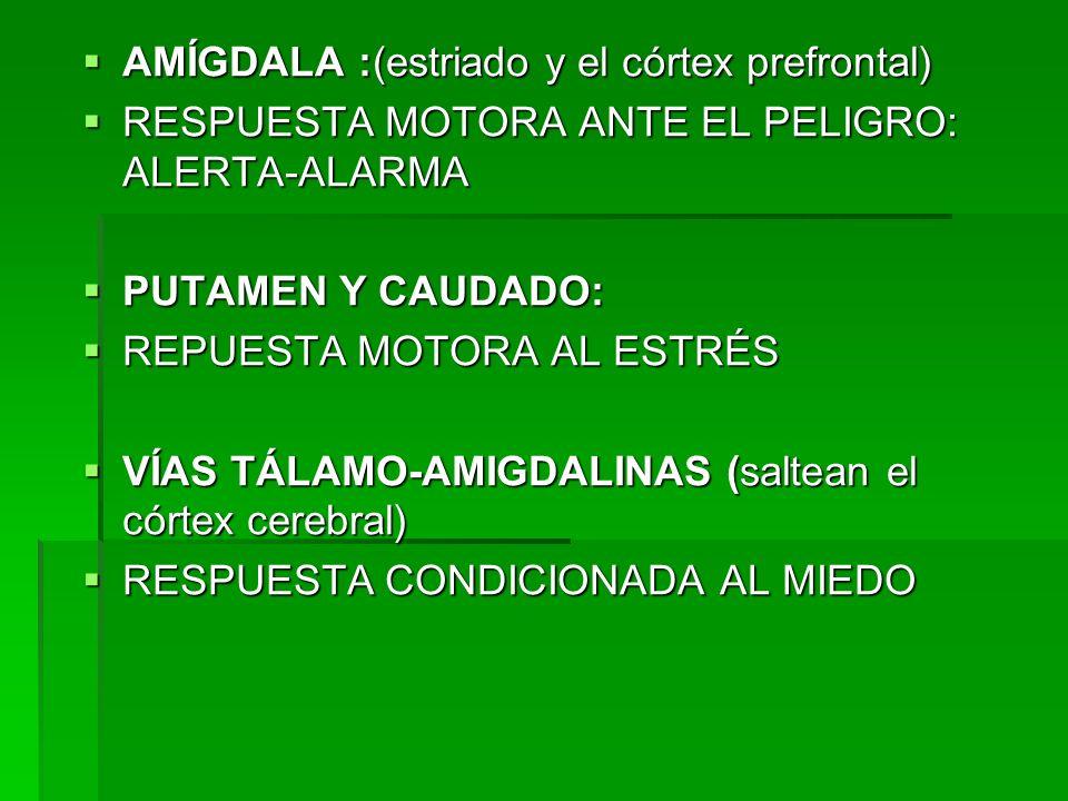 CÓRTEX: PREFRONTAL Y CÍNGULO ANTERIOR: PREFRONTAL Y CÍNGULO ANTERIOR: -PLANIFICACIÓN DE LA ACCIÓN -PLANIFICACIÓN DE LA ACCIÓN -ALMACENAMIENTO DE LOS MÚLTIPLES ELEMENTOS DE LA MEMORIA DE TRABAJO -ALMACENAMIENTO DE LOS MÚLTIPLES ELEMENTOS DE LA MEMORIA DE TRABAJO PARIETALY CÍNGULO POSTERIOR: PARIETALY CÍNGULO POSTERIOR: - PROCESAMIENTO VISOESPACIAL DE LA RESPUESTA AL ESTRÉS - PROCESAMIENTO VISOESPACIAL DE LA RESPUESTA AL ESTRÉS MOTOR: MOTOR: -SUSTRATO NEURAL DE LA PLANIFICACIÓN DE LA ACCIÓN -SUSTRATO NEURAL DE LA PLANIFICACIÓN DE LA ACCIÓN