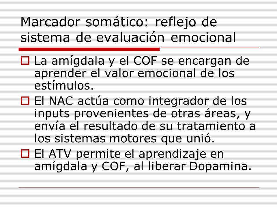 Marcador somático: reflejo de sistema de evaluación emocional La amígdala y el COF se encargan de aprender el valor emocional de los estímulos. El NAC