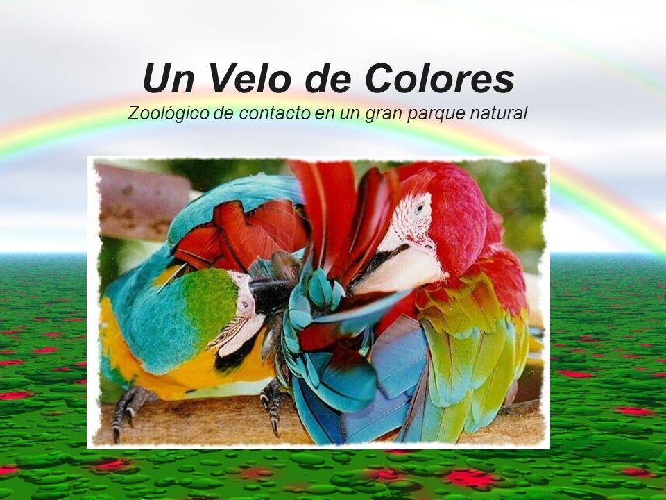 Un Velo de Colores Zoológico de contacto en un gran parque natural