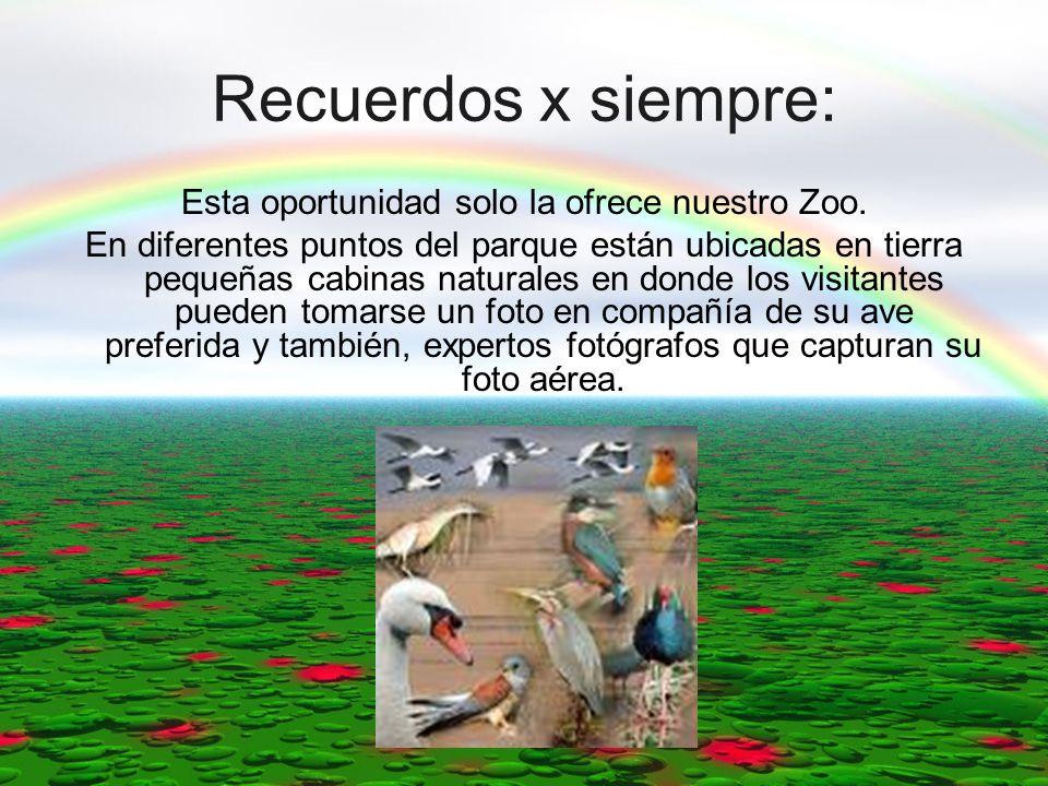 Recuerdos x siempre: Esta oportunidad solo la ofrece nuestro Zoo. En diferentes puntos del parque están ubicadas en tierra pequeñas cabinas naturales