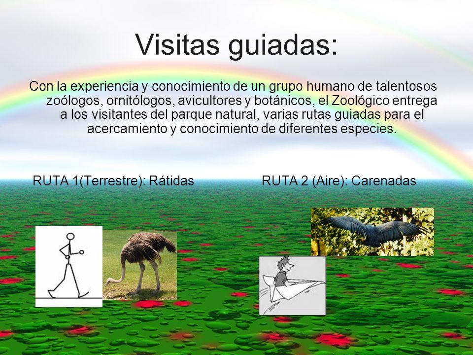 Visitas guiadas: Con la experiencia y conocimiento de un grupo humano de talentosos zoólogos, ornitólogos, avicultores y botánicos, el Zoológico entre