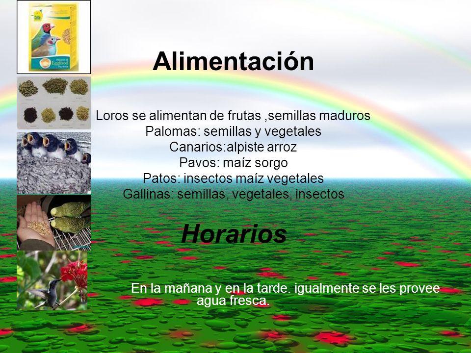 Alimentación Loros se alimentan de frutas,semillas maduros Palomas: semillas y vegetales Canarios:alpiste arroz Pavos: maíz sorgo Patos: insectos maíz