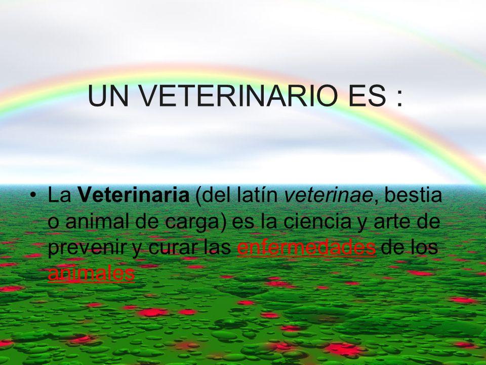 UN VETERINARIO ES : La Veterinaria (del latín veterinae, bestia o animal de carga) es la ciencia y arte de prevenir y curar las enfermedades de los an