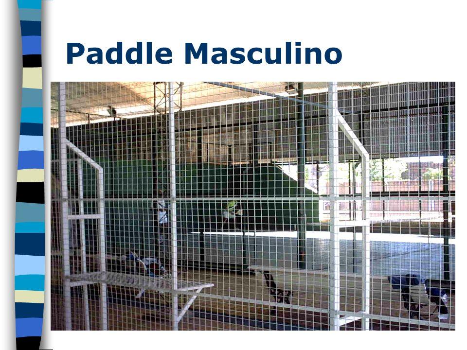 Paddle Masculino
